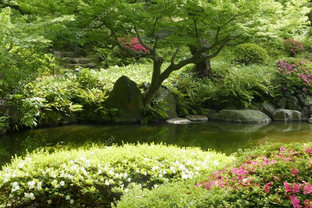 Etang Plante Arbre Fleur De Jardin Zen Japonais Photographie