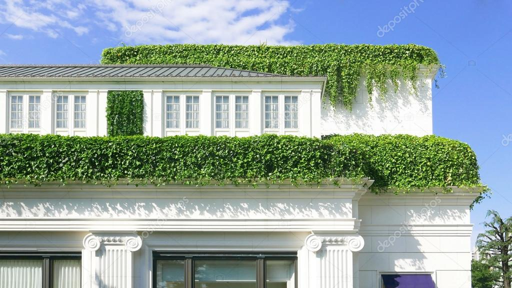 Country house with green plants