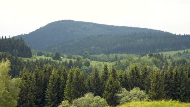 Lesní stromy. Krajina panorama.