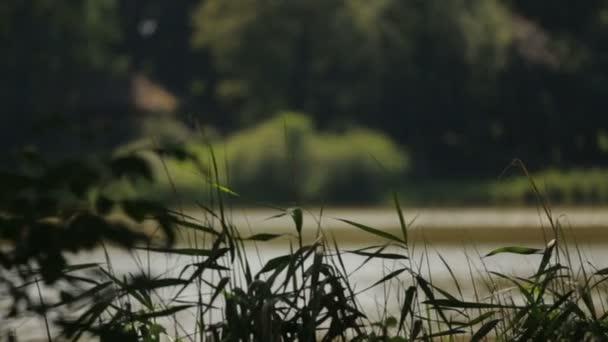 Idyllischer Blick auf den See bei sonnigem Tag.