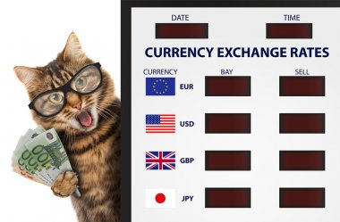 Funny cat, currency exchange.