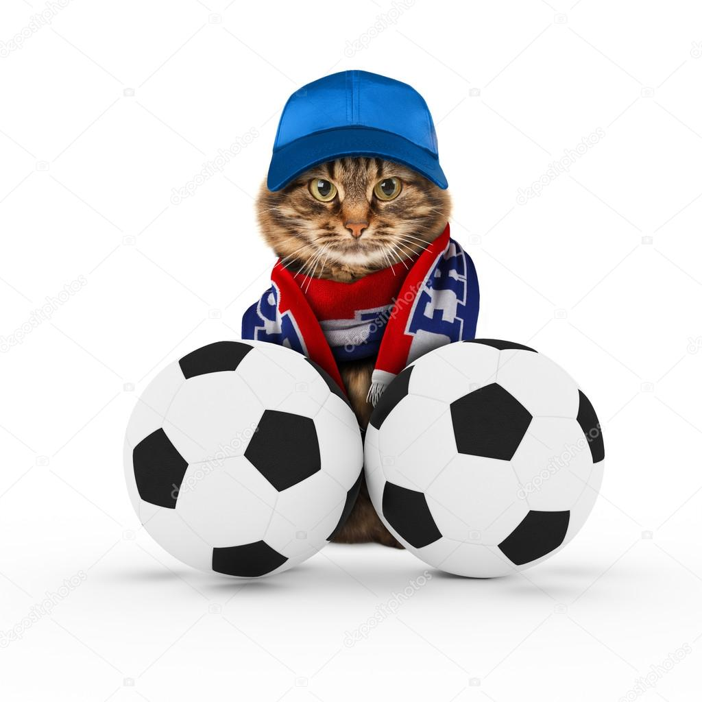 Funny cat with soccer balls — Stock Photo © funny cats  107488784 a364eb339