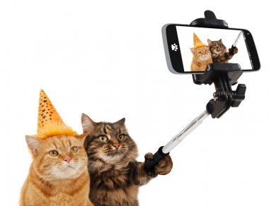 Funny cats - Selfie picture
