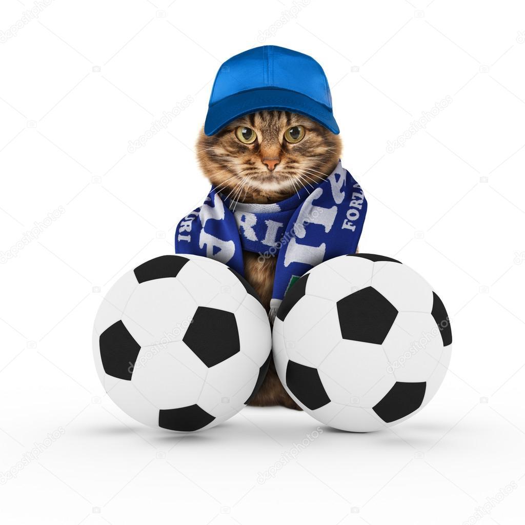 Vicces macska a futball-labdák — Stock Fotó © funny cats  109856398 21bc70cbe4