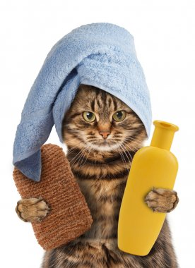 Funny cat washes