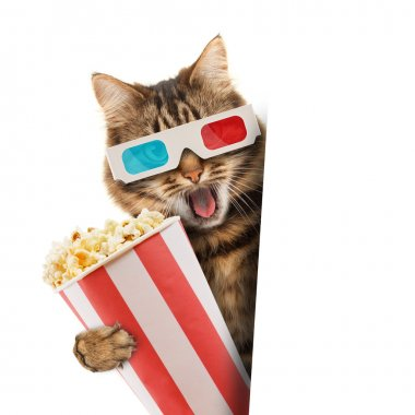 Cat in the 3d glasses with popcorn basket.