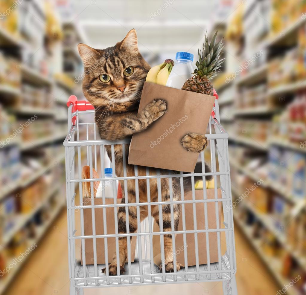 поступать картинки кошки в магазине трахают очереди
