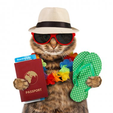 Cat with passport and airline ticket