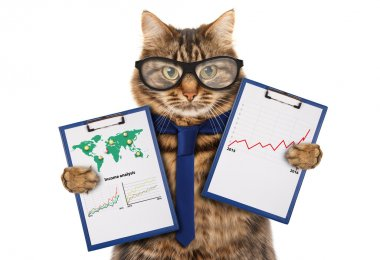Cat with a folder for presentations