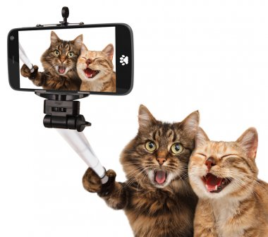 Funny cats - Self picture. Selfie stick in his hand. Couple of cat taking a selfie together with smartphone camera stock vector