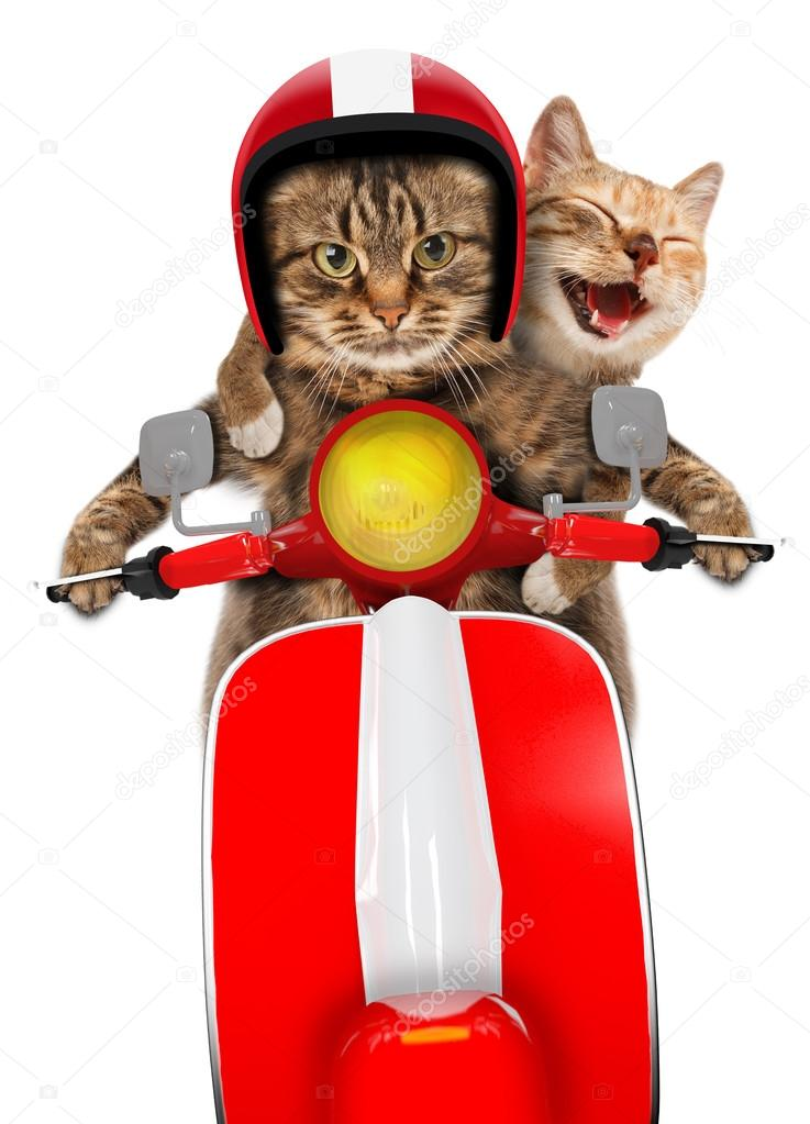 Funny cats - driving a moped