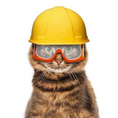 Craftsman cat in helmet