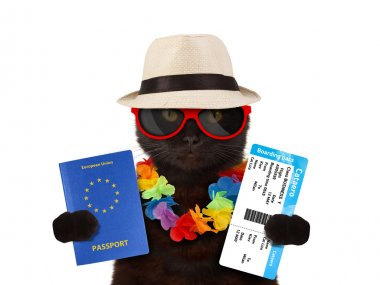 Cat going on vacation