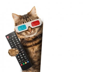 Cat with a remote control to TV.