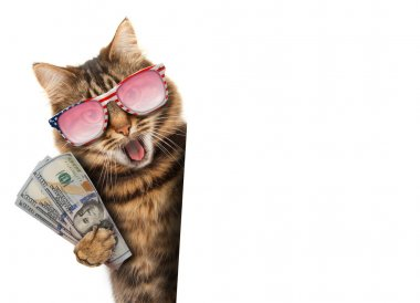 Funny cat with money