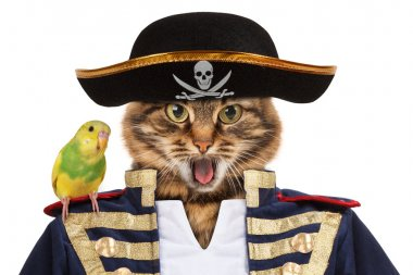 Funny cat - pirate
