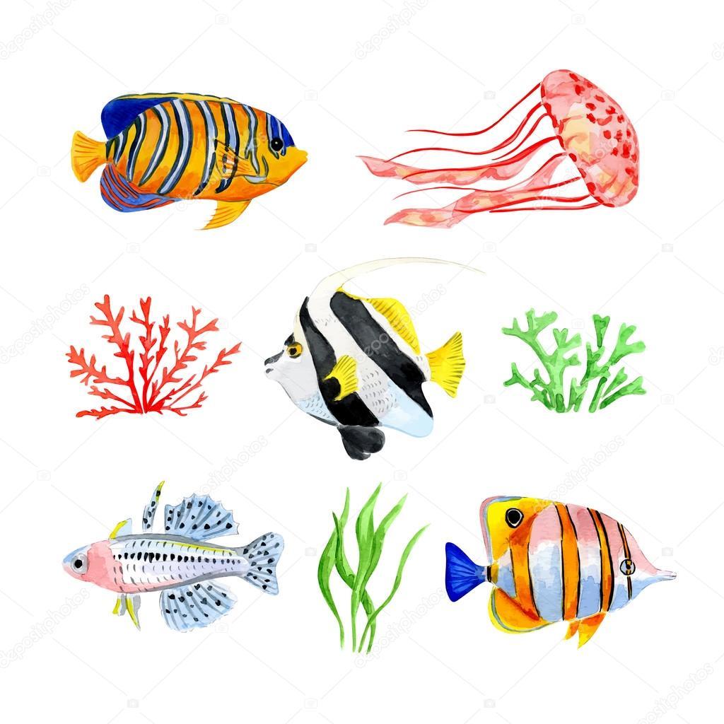Set of marine fish
