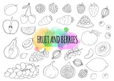 Linear hand drawn fruit and berries