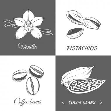 Vector illustration with vanilla, pistachios, cocoa and coffee b