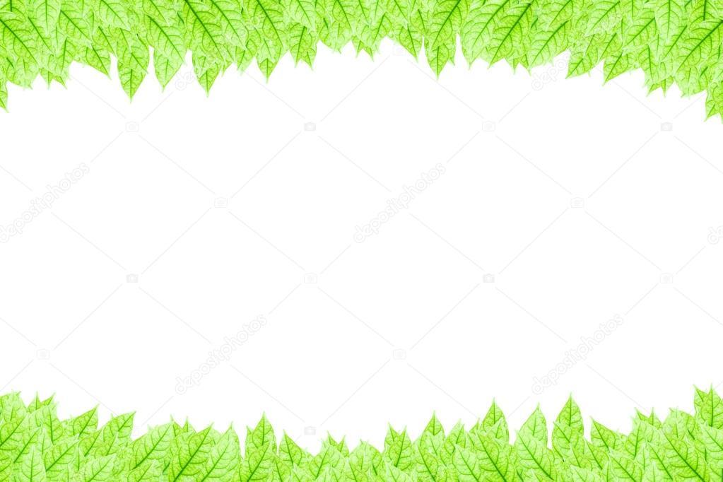 Fondo Blanco Con Verde: Marco De Hojas Verdes Frescas