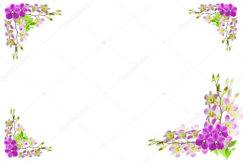 Beautiful orchid flower frame on white with blank place for text ...