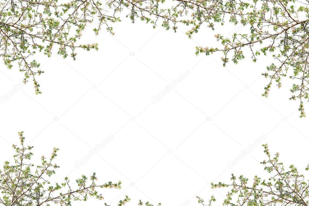 Marco De Hermosas Hojas Verdes Sobre Fondo Blanco