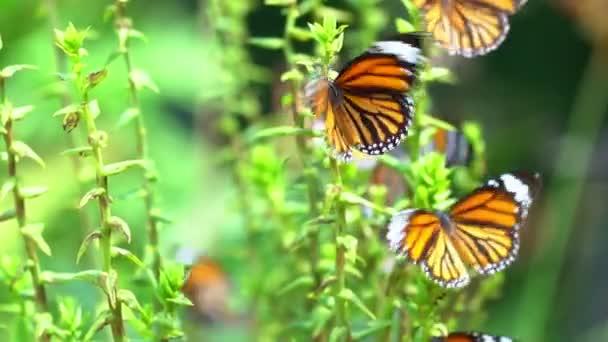 Gyönyörű sok pillangó a dzsungelben trópusi esőerdő, buja lombozat természetes háttér