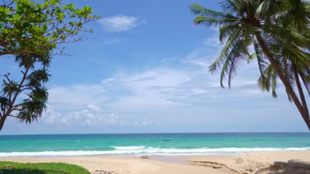 Coconut Palm trees and sea Beautiful beach in sunny summer day Good weather day on the paradise island Amazing nature view beach and sea landscape