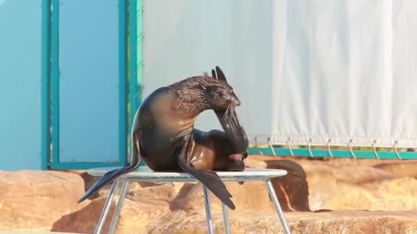 Fur Seal playing