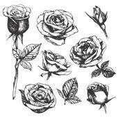 részletes, kézzel rajzolt Rózsa