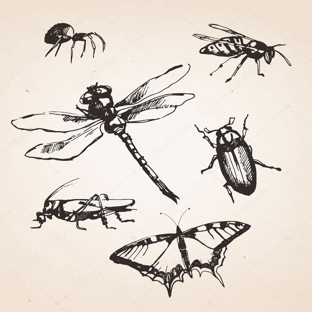 Imágenes Escorpiones Para Dibujar A Lapiz Conjunto De Insectos
