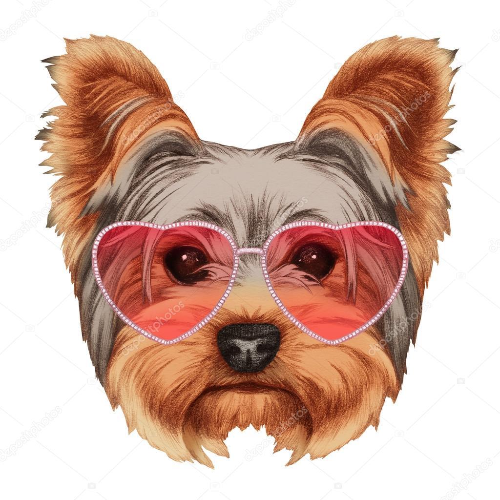 Yorkshire Terrier con gafas de sol en forma de corazón — Fotos de ...