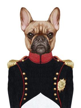 Portrait of French Bulldog in military uniform