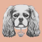 Cavalier King Charles spániel portréja