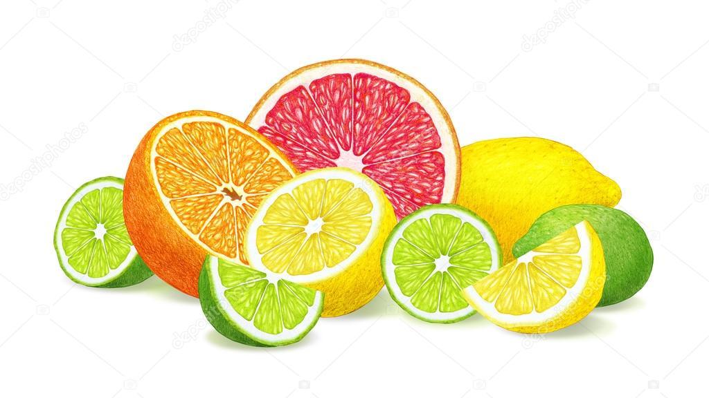 「柑橘類 イラスト」の画像検索結果