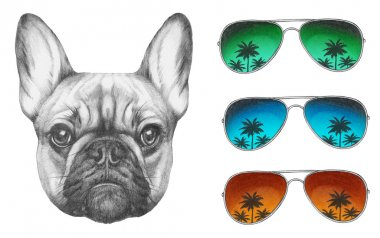 French Bulldog with mirror sunglasses.
