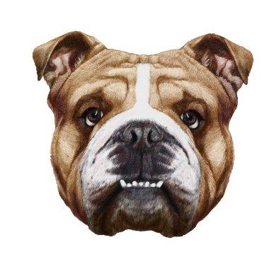 Original drawing of English Bulldog