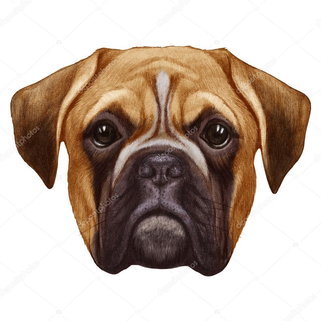 Dessin original de chien boxer photographie victoria novak 80943766 - Dessin chien boxer ...
