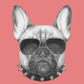 Photo French Bulldog with collar and sunglasses