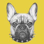 Photo French Bulldog with collar