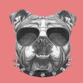Fotografia Bulldog inglese con collare e occhiali da sole