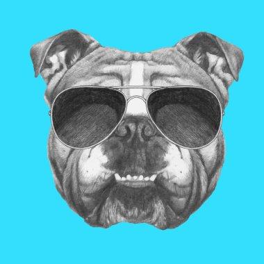 English Bulldog with sunglasses