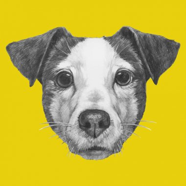 Hand drawn portrait of Jack Russell. Vector clip art vector