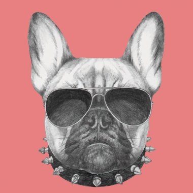 Hand drawn portrait of French Bulldog with collar and sunglasses . Vector isolated elements. stock vector