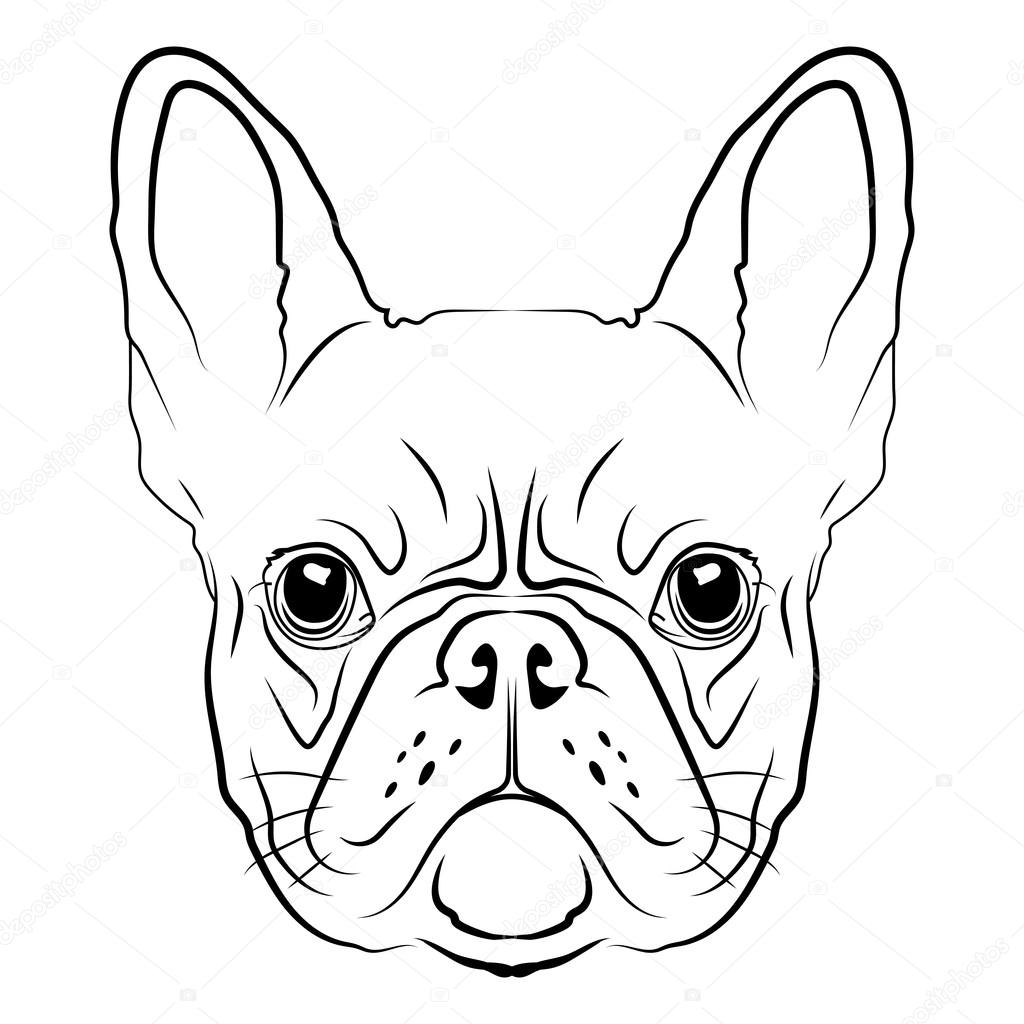 how to draw a easy bulldog face