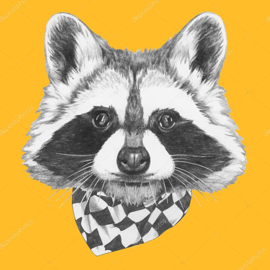 portrait of Raccoon with scarf