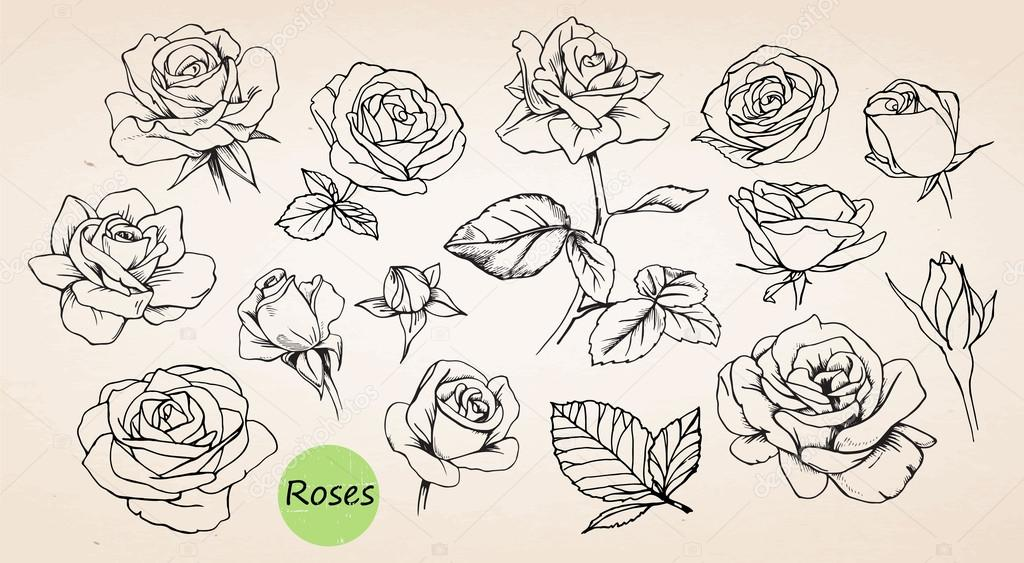 Set Of Hand Drawn Roses Stock Vector Victoria Novak 85119944