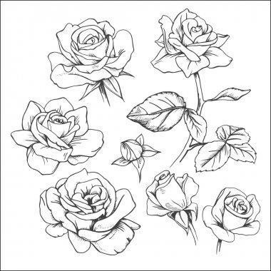 Set of hand drawn roses