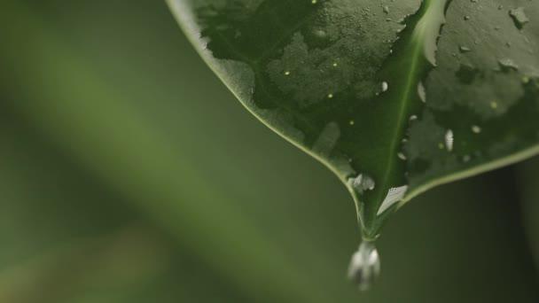 Regentropfen auf einem Pflanzenblatt