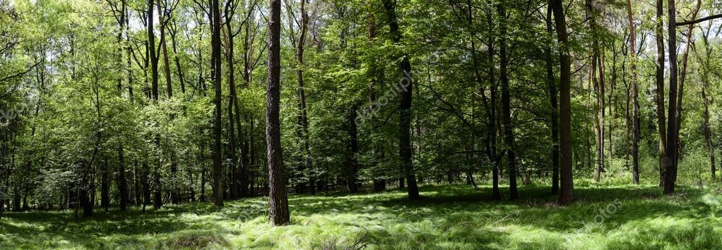 Фотообои Green forest panorama